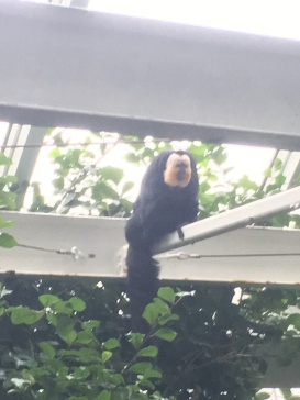 Monkeying around at Megarkaryocyte and Platelet GRC in Galveston
